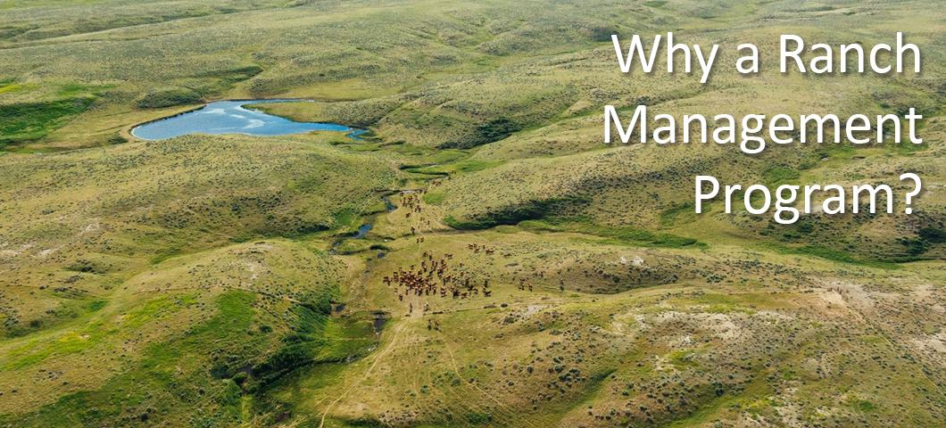 An overhead  view of cattle roaming the large range land.