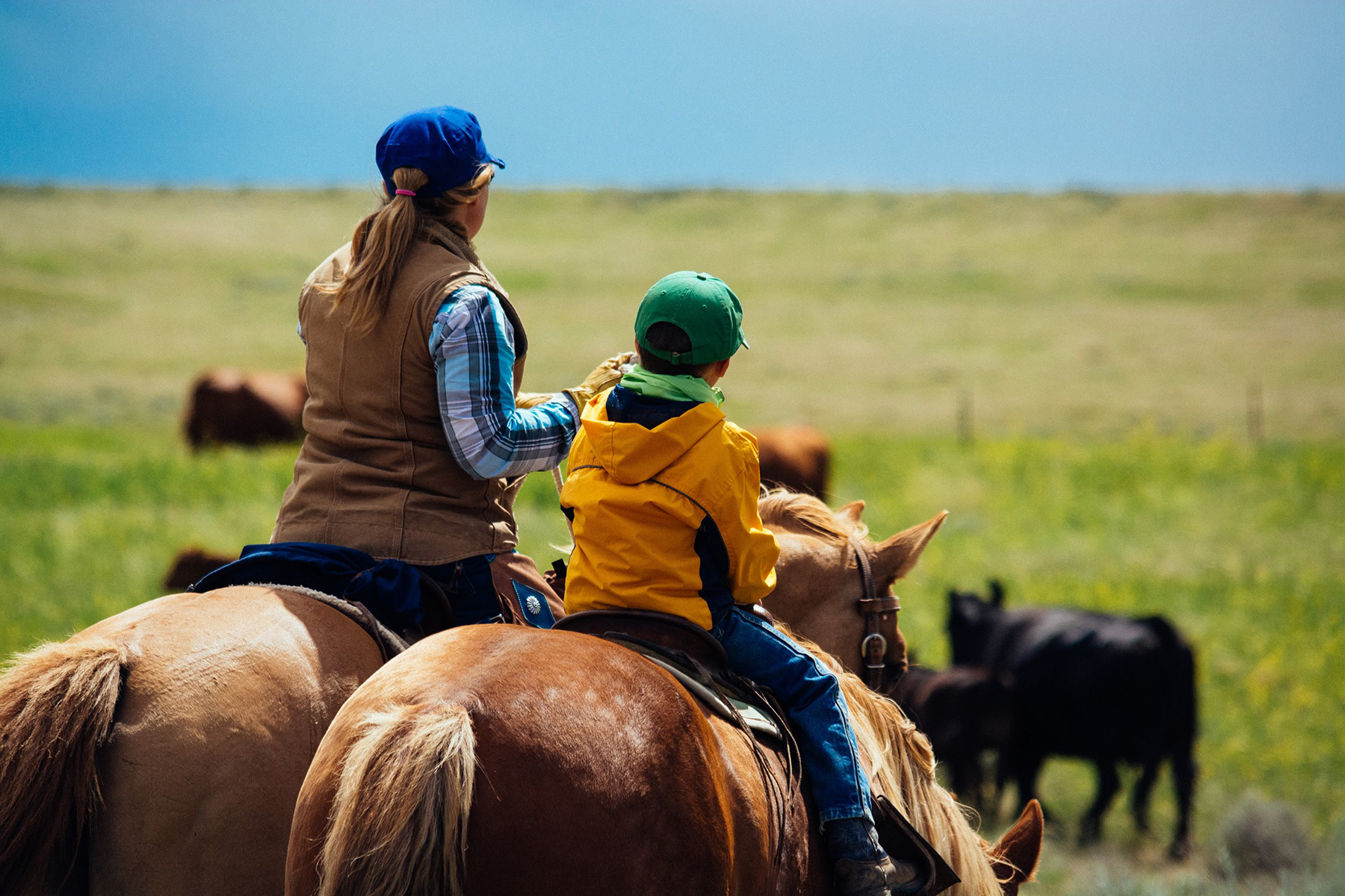 Mother and son riding horseback among cattle on ranch.