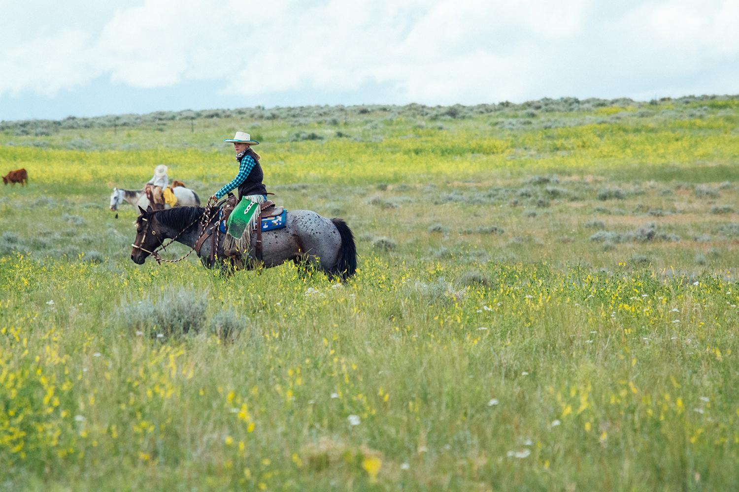 Young woman riding horseback on the range moving cattle.