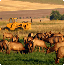 Elk Farm photo by Gary Matthews